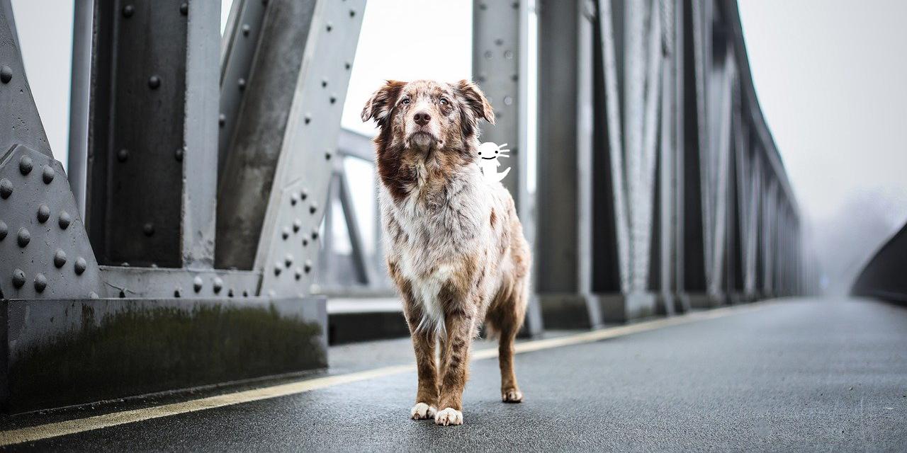 サバイバーズ 孤独の犬感想イメージイラスト